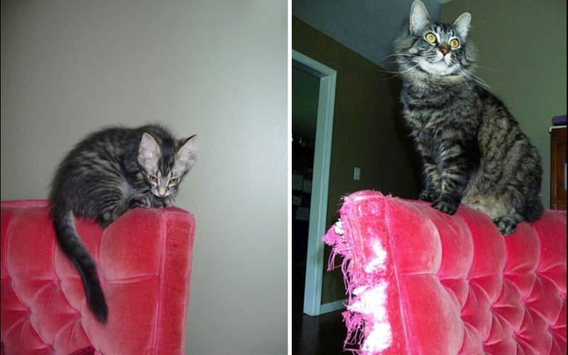 XX-Before-And-After-Photos-Of-Cats-Growing-Up-2__880