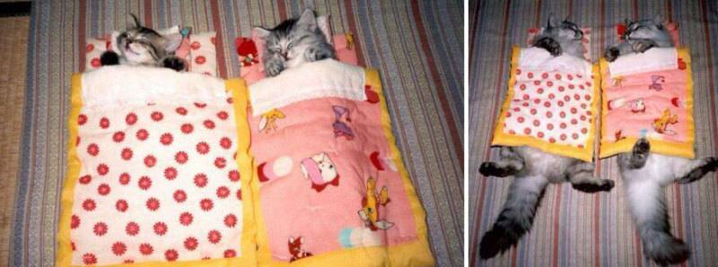 cat-before-after-200__880