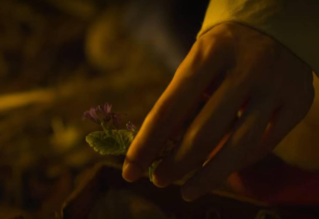 【李屍朝鮮2截圖】:徐菲在一個貌似廚房的地下發現生死草