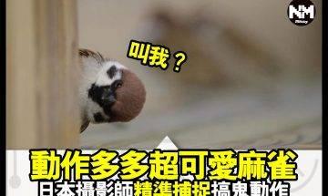 【#時事新聞台】呢隻雀,圓到好似麻糬!  原來麻雀仔一樣