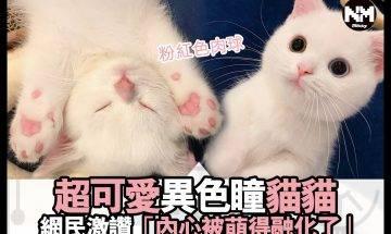 【#時事新聞台】呢隻貓貓,真係超級可愛!