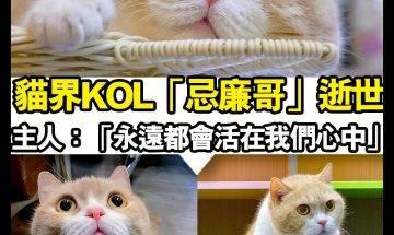 【#時事新聞台】香港貓界KOL「忌廉哥」去彩虹橋了 終年15