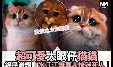 【#時事新聞台】呢隻貓貓,同《史力加》嗰隻相似度100%