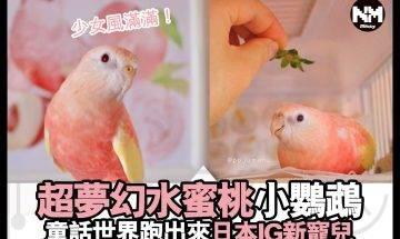 【#時事新聞台】呢隻鸚鵡仔,真係好夢幻!