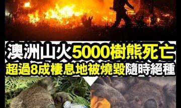 【#時事新聞台】澳洲樹熊隨時絕種?!