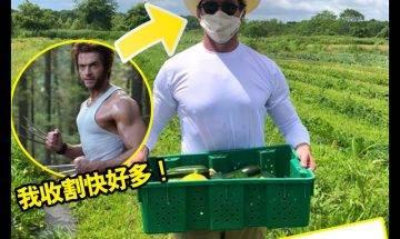 【#時事新聞台】Hugh Jackman趁疫情到農場做義工!