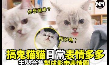 【#時事新聞台】好多貓貓都係戲精嚟,你又見過主子咩表情?分享