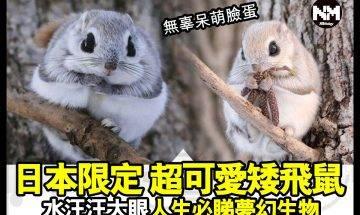 【#時事新聞台】真係超可愛!