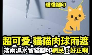 【#時事新聞台】呢把貓貓肉球雨遮,真係睇到人「心心眼」!