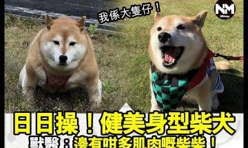 【#時事新聞台】柴柴唔只識蠢萌!