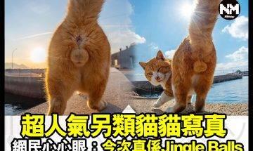 【#時事新聞台】人養嘅貓貓得意,不過野生貓貓一樣勁可愛!