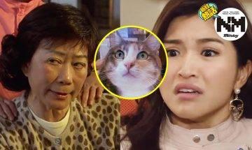 【婆媳紏紛】奶奶為逼新抱生仔 偷上新居將家貓「放生」  網民:根本就係癡線!