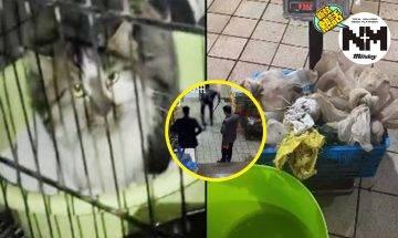 【新冠病毒】中國內地野味市場重開!死灰復燃過百活貓被關待宰割