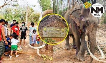 【新冠肺炎】泰國大象餓到皮包骨!主人:冇遊客,哪有錢買嘢俾佢食?