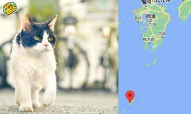 日本為一個原因、狠心捕殺奄美大島3千隻貓貓!