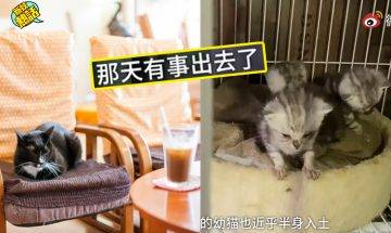 中國貓cafe執笠、30隻貓慘被棄養!半個月後「飄出臭味」被人發現變貓地獄