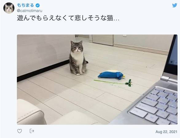 (圖片來源:もちまる@Twitter)